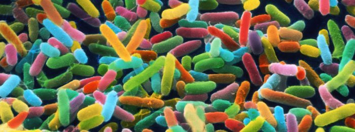 Microbiome Domain Name